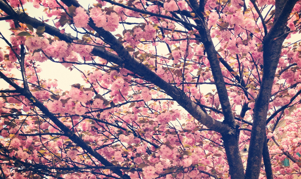 Jennifer Frisk: Resan med ett rosa filter