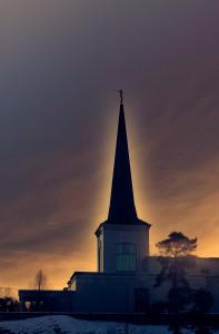 Mormonkryka